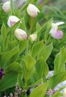 Anspruchsvolle Zierpflanzen