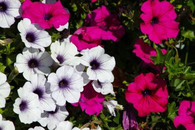 Nährstoffe sind unverzichtbar für Pflanzen !-
